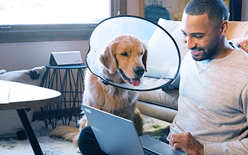 A man sits on the floor with his laptop, petting his golden retreiver who is wearing a cone around his neck